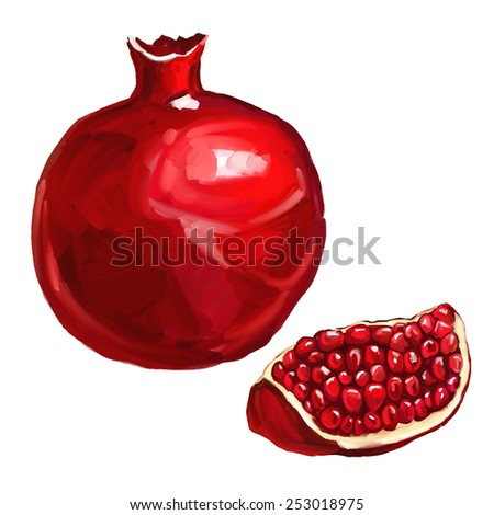 fruit pomegranate vector illustration  hand drawn  painted watercolor - stock vector