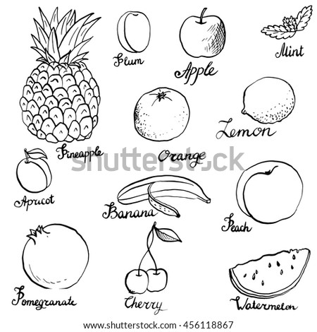 fruits and berries set ink drawing vector elements