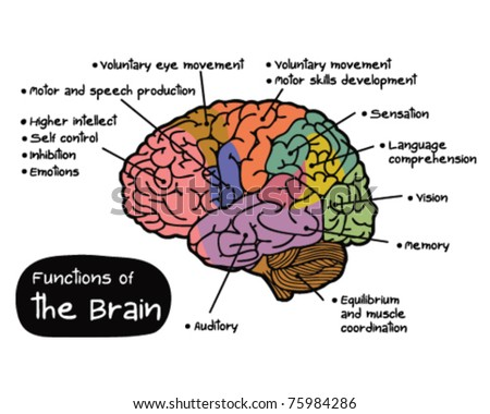 Function of Brain - stock vector