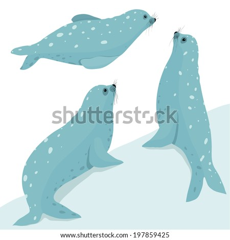 Fur Seal Wildlife Illustration Set. Three seals in different poses. Layered Vector illustration EPS8. - stock vector