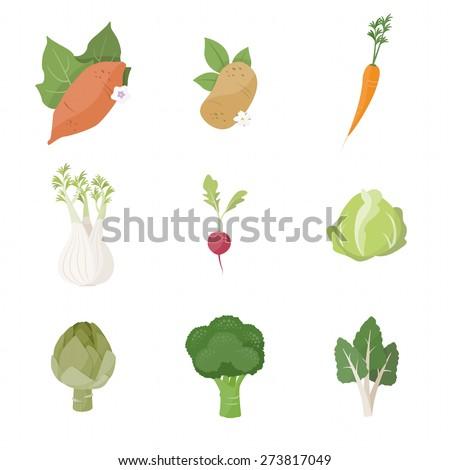 Garden fresh vegetables set on white background, including sweet potato, potato, carrot, fennel, radish, cabbage, artichoke, broccoli and chard - stock vector
