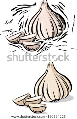 Garlic and garlic clove in woodcut line style. - stock vector