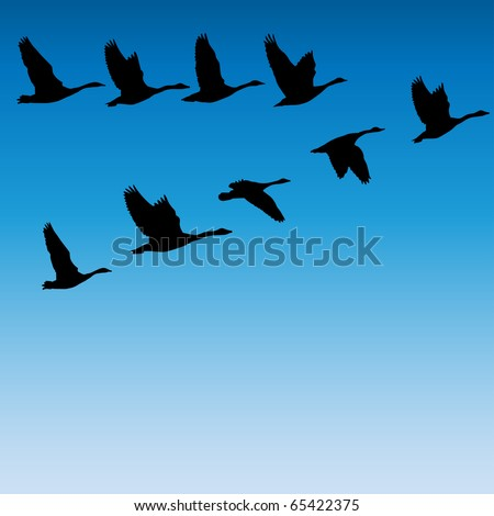 geese flying - stock vector