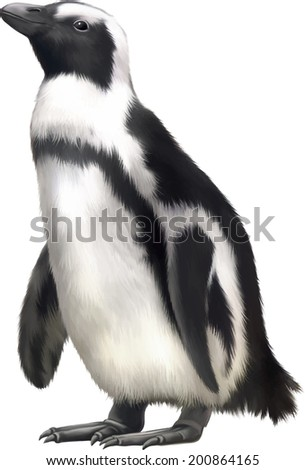 gentoo penguin. Vector illustration isolated on white background - stock vector