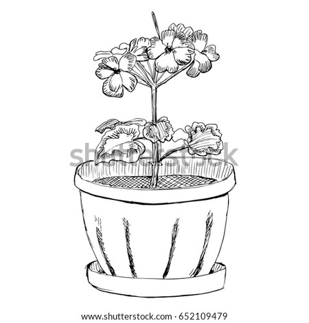 geranium flower in a pot hand drawn sketch vector illustration eps10