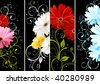 gerbera floral background - stock vector