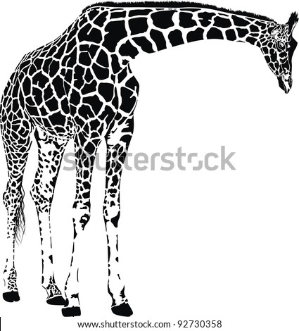 Giraffe - isolated vector with spots