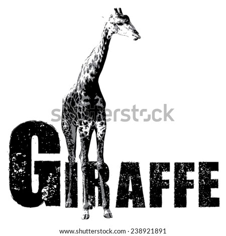 giraffe vector, rubber stamp - stock vector