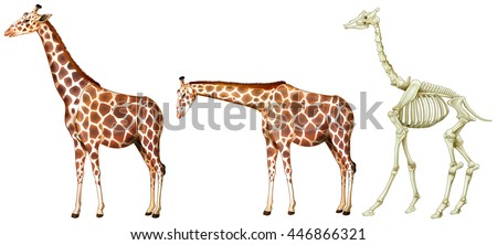 Giraffe with skeletal system illustration