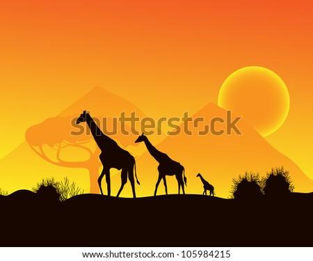 Giraffes walking across the desert, vector image - stock vector