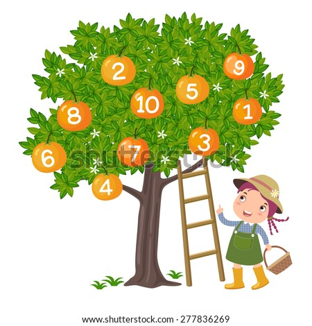 Girl picking orange and counting number - stock vector