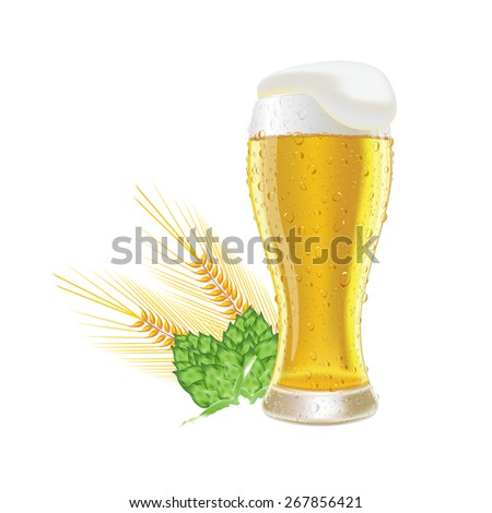 Glass fresh beer with cap of foam and water drop barley and hops isolated on white background vector illustration  - stock vector