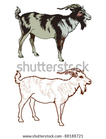 Goat - stock vector