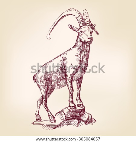 Goat Hand Drawn Vector Llustration Realistic Sketch