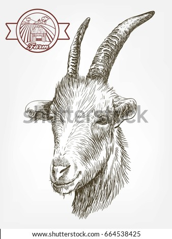 Goat Head Livestock Animal Grazing Sketch Drawn By Hand On A White Background