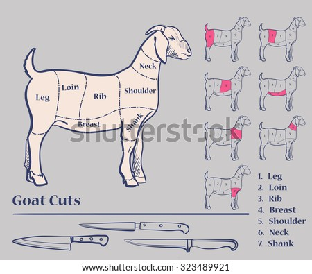 Goat Meat Cuts Diagram Excellent Vector Illustration EPS 10