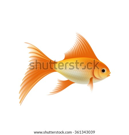 Gold fish. Isolated on white background. Stock vector illustration.