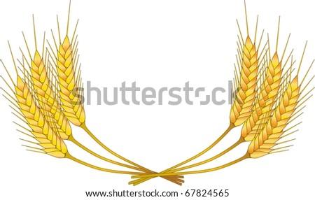 grain - stock vector