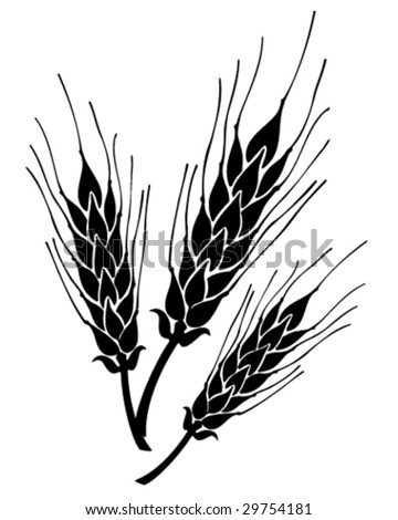 grain ears vector illustration