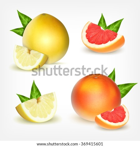 Grapefruit and pomelo with green leaves. Vector icons. EPS10