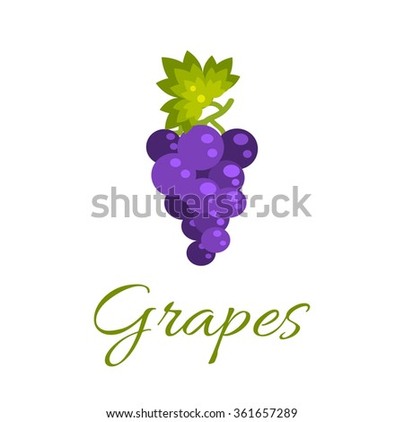 Grapes isolated vector icon. Gapes fruit on vine with leaf. Purple grapes. Wine or juice branding logotype. - stock vector