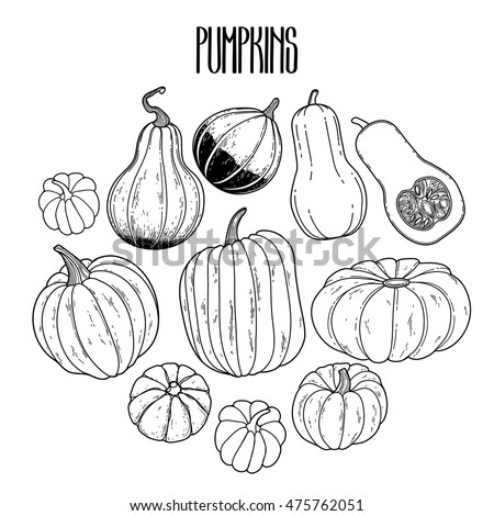 Graphic collection of pumpkins drawn in line art style. Vector elements for thanks giving day design. Coloring book page for adults and kids