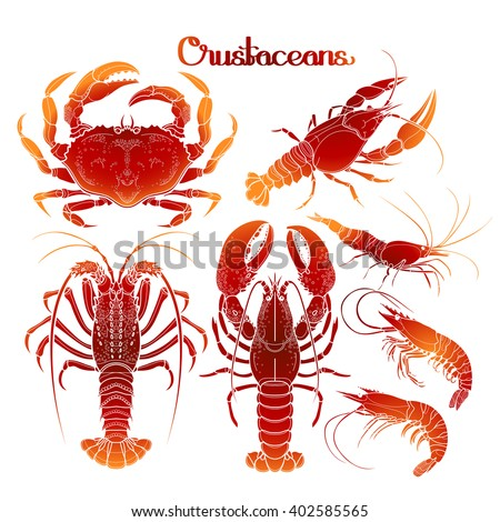 Graphic crustaceans collection  for seafood menu. Sea and ocean creatures isolated on white background. Coloring book page design - stock vector