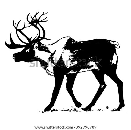 Graphic image of a wild animal on a white background. The figure as a black contour reindeer, wild animal with big antlers. Vector illustration, abstract in black and white - stock vector