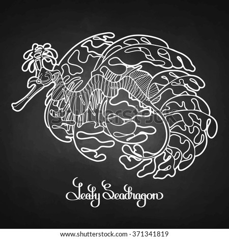 Graphic Leafy Seadragon drawn in a line art style. Sea horse. Ocean creature isolated on chalkboard - stock vector