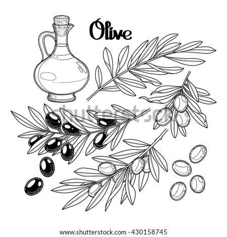 graphic olive collection isolated on white background olives on the branches olive oil in