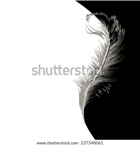 Graphic stylized bird feather. Vector  - stock vector