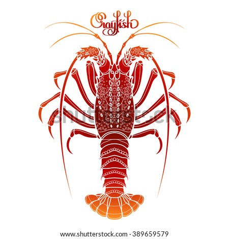 Graphic vector crayfish drawn in line art style. Spiny or rocky lobster. Sea and ocean creature isolated on white background in red colors. Top view. Seafood element. Coloring book page design - stock vector