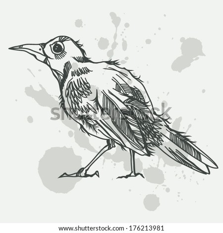 Graphic Vector Illustration With Hand Drawn Bird