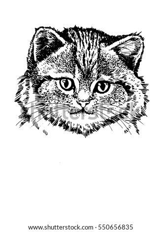 Graphical portrait of fat cat. Vector illustration for tattoo, printing and coloring