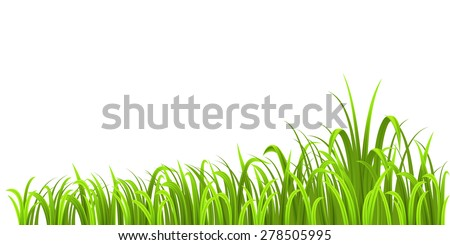 Grass growth isolated on white background - stock vector