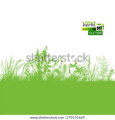 Grass silhouette background. Vector