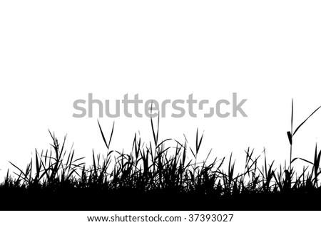 Grass silhouette black - stock vector