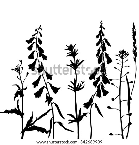 Vector wild flowers Stock Photos, Images, & Pictures ...