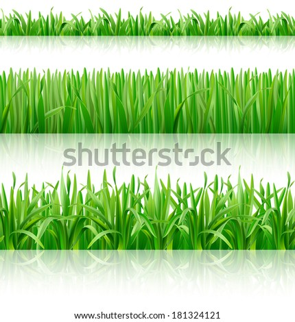 Grass. Vector Eps 10. - stock vector
