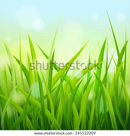 Grass. Vector illustration. - stock vector