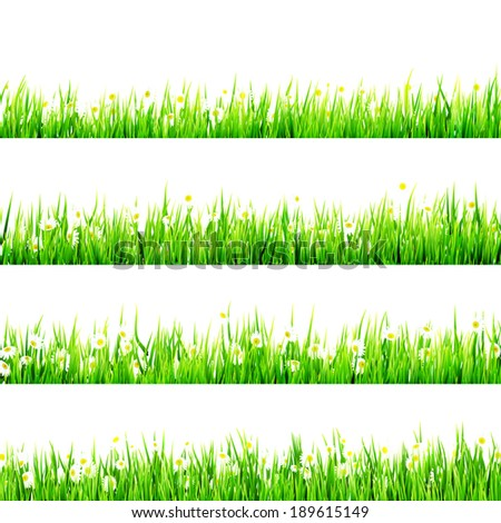 Grass with Little white Daisy. And also includes EPS 10 vector - stock vector