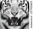 Gray scale closeup portrait of a white bengal tiger with open chaps. Oil painting style. The biggest cat. Wild beauty of the most dangerous and mighty beast. Vector illustration. - stock