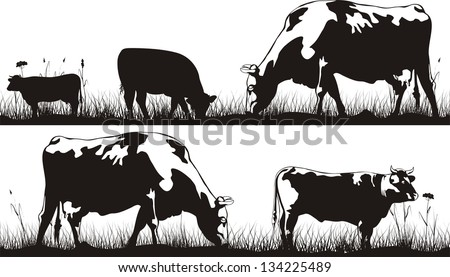 grazing cattle - cow and bull - stock vector