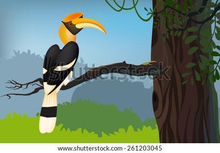 Hornbill Bird Images Great Hornbill Bird