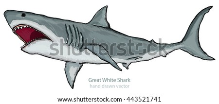 Great white shark isolated on white shark attack hand drawn vector - stock vector