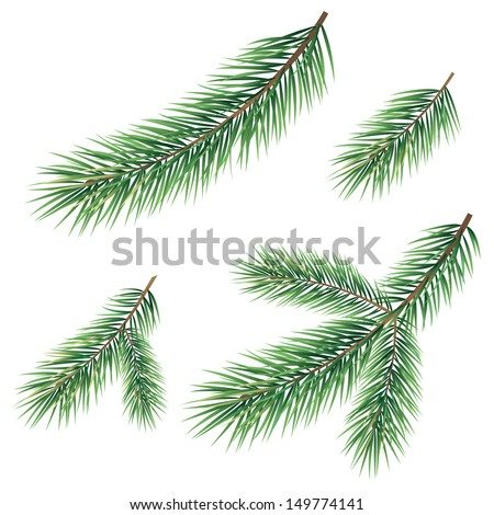 Green branches of a Christmas tree, set, isolated on white background. Vector - stock vector
