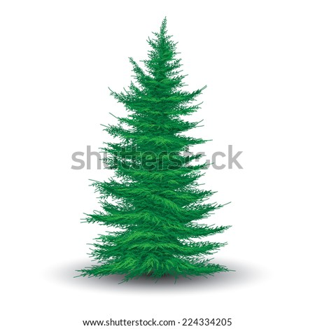 Green fir tree isolated on white. Realistic vector illustration - stock vector