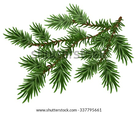 Green fluffy pine branch. Isolated on white illustration