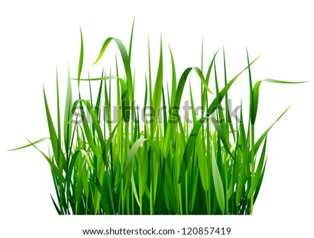 Green fresh grass isolated on white background - stock vector