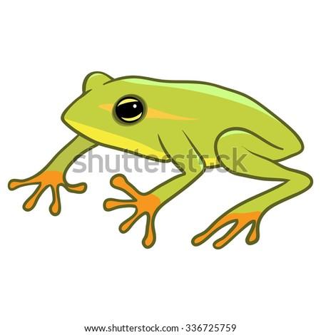 Green frog illustration - stock vector
